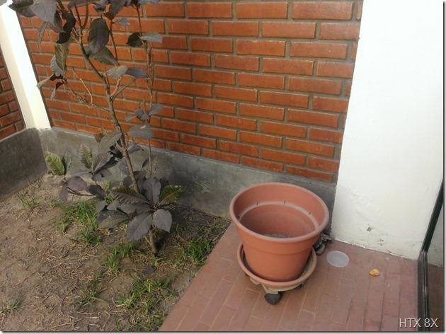jardin 8x