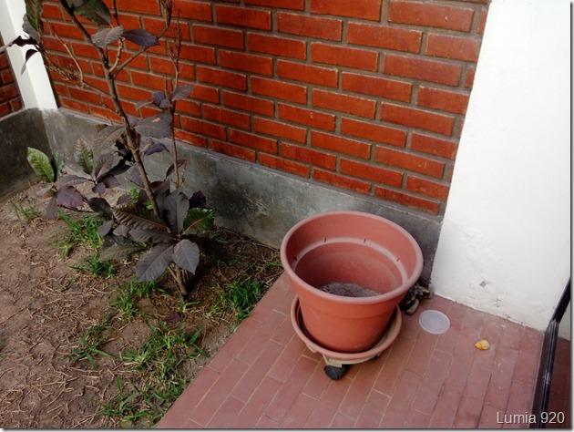 jardin 920