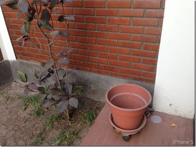 jardin i